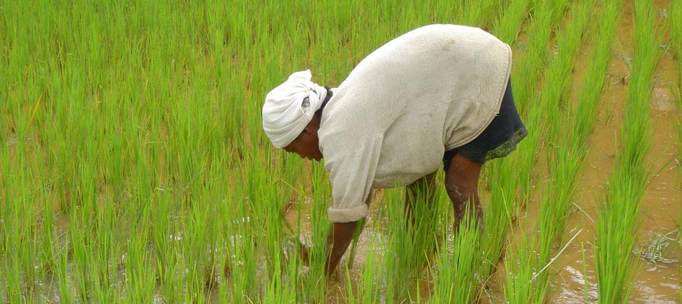 Femme malgache dans les rizières